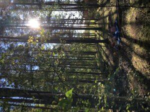 Små ryggsäckar i skogen.